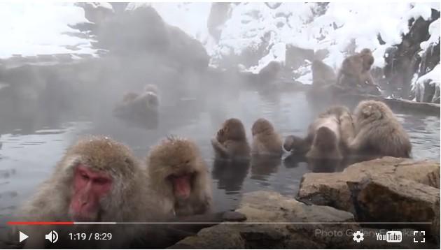 動物たちの防寒対策。猿は温泉、インド象は靴下