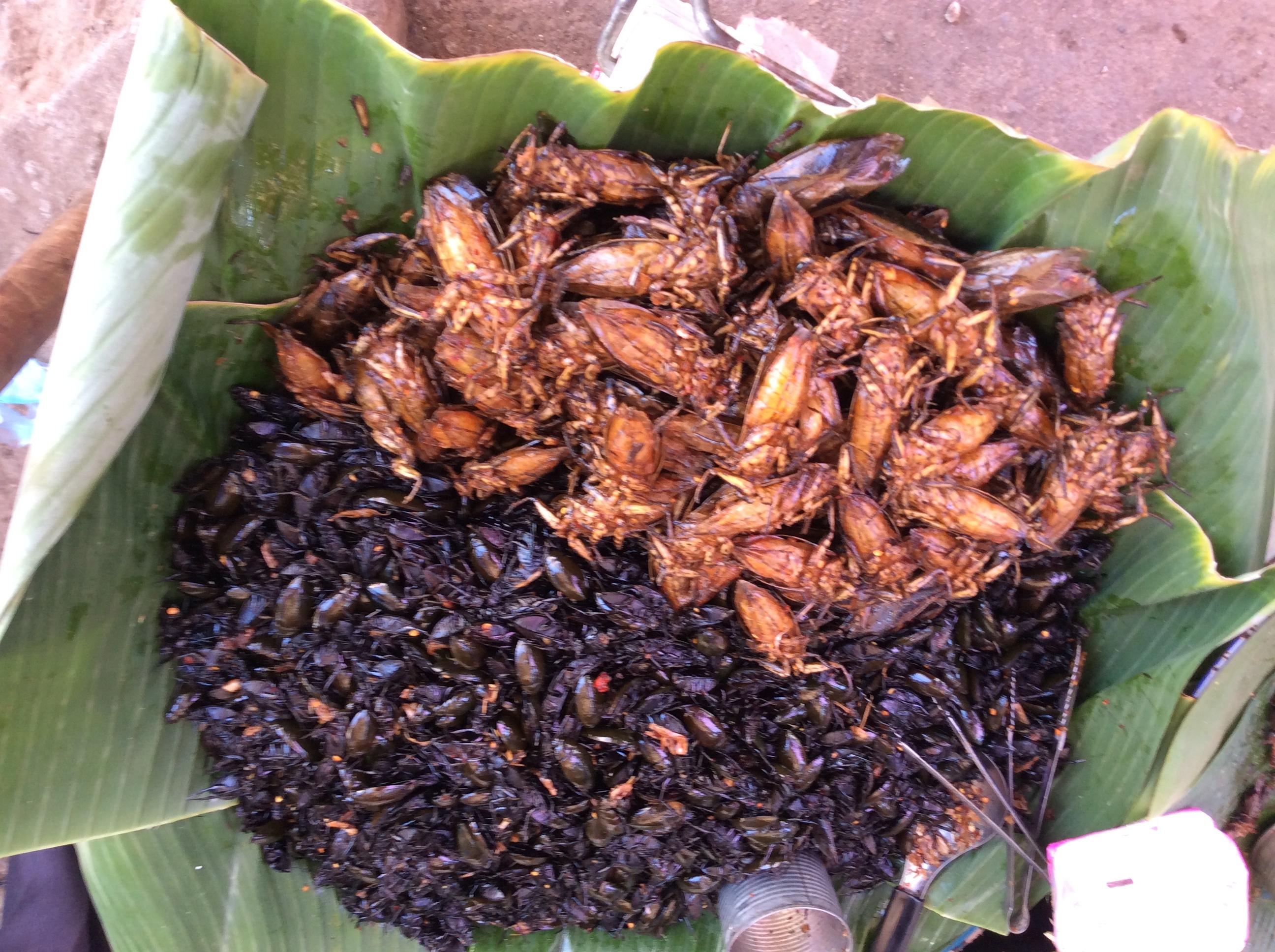 カンボジアの「虫やカエル」は超美味い(写真付き)