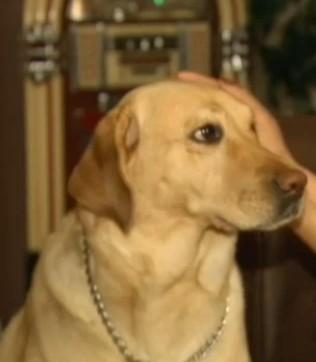 全米で話題の犬 ヨランダちゃんの活躍を紹介