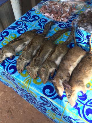 [閲覧注意] タイのローカル市場で売られている虫やネズミなど